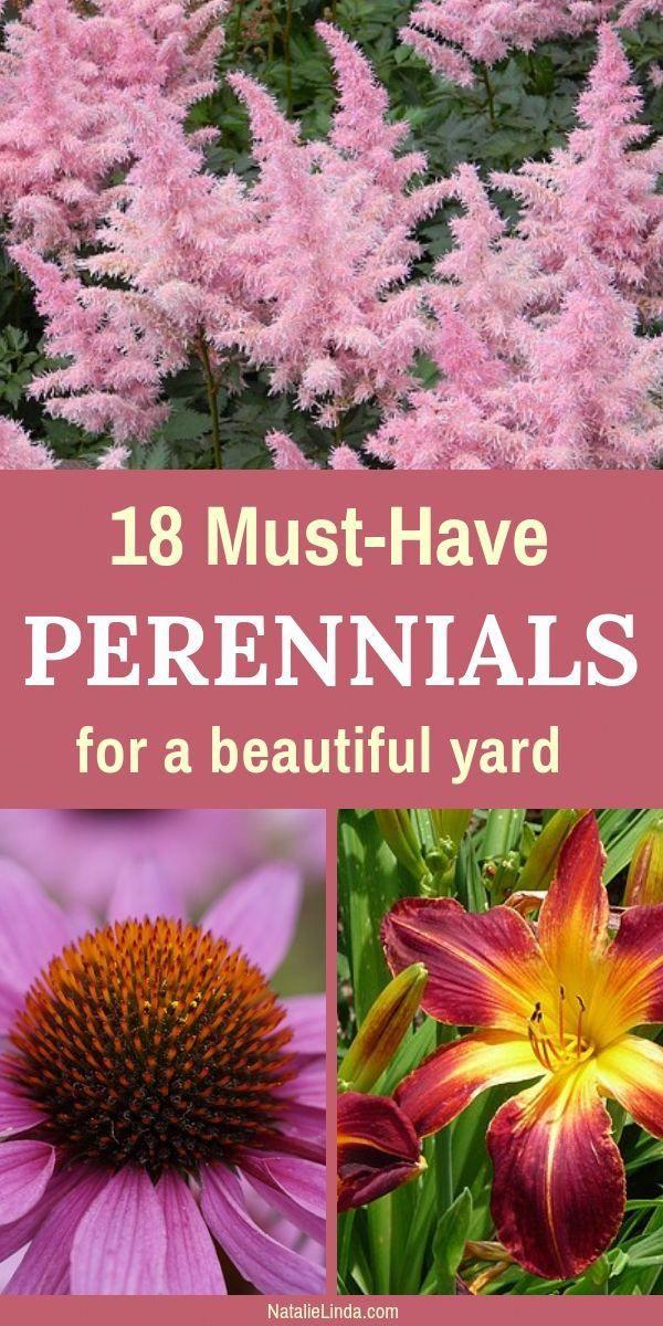 18 Low Maintenance Perennials