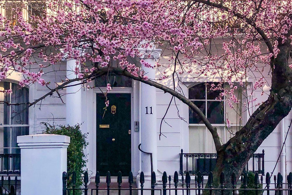 Where To See Magnolia And Cherry Blossom In London Printable Guide And Map