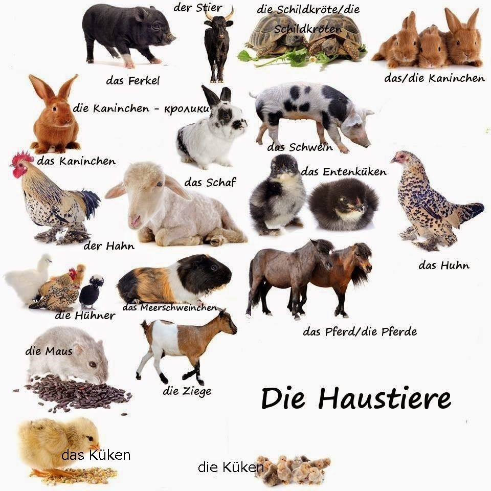 German For All Deutsch Fur Alle Die Haustiere German Language Learn German German