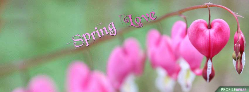 Spring love cover for facebook timeline pinterest timeline spring love cover for facebook altavistaventures Choice Image