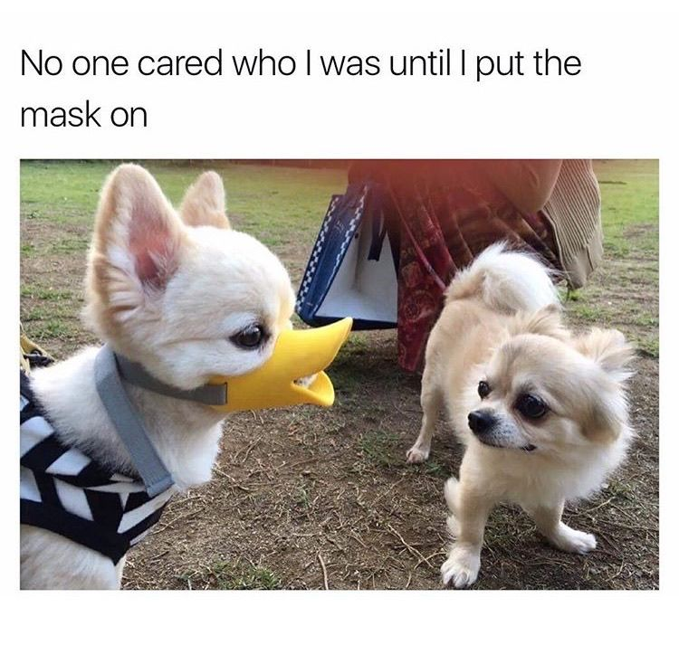 48 Of The Best Memes Of The Week Best Funny Photos Corgi Funny Best Memes