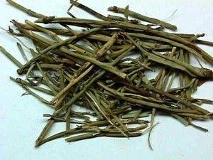 Planting & Growing Ephedra Sinica Seeds   Herbs   Seeds, Seeds for