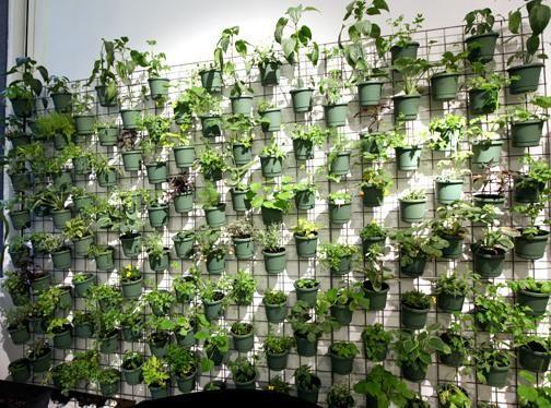 Muro verde jardin pinterest verde fachada verde y for Muros verdes arquitectura