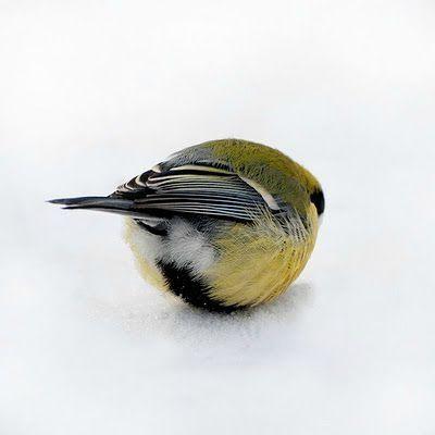 Birdball by Serge Adamovich. ☚