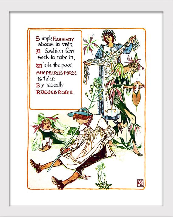 Vintage illustration from the classic book A Floral Fantasy in an Old English Garden. Set forth in verses & coloured designs.  Titled: Honesty