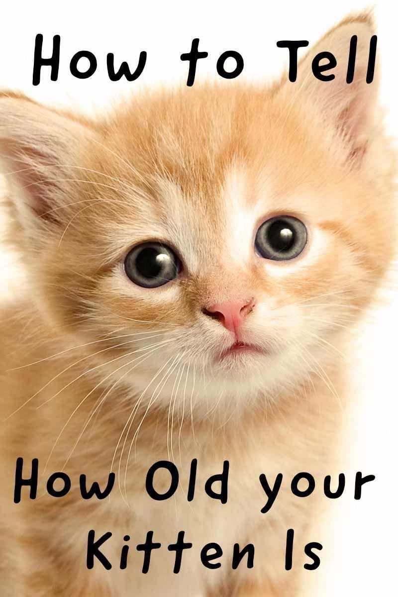 How To Tell How Old Your Kitten Is Cat Health And Care Advice From The Happy Cat Site Cathealthhappy With Images Kitten Care Cat Health Cat Care