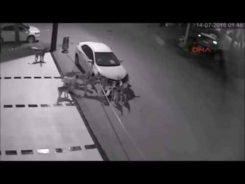 Gangue de Cachorros Quebrando Carro Vandalismo Canino - YouTube