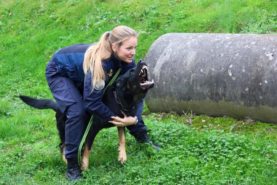 K9 Jin From Zurich State Police Switzerland Dogs Working Dogs