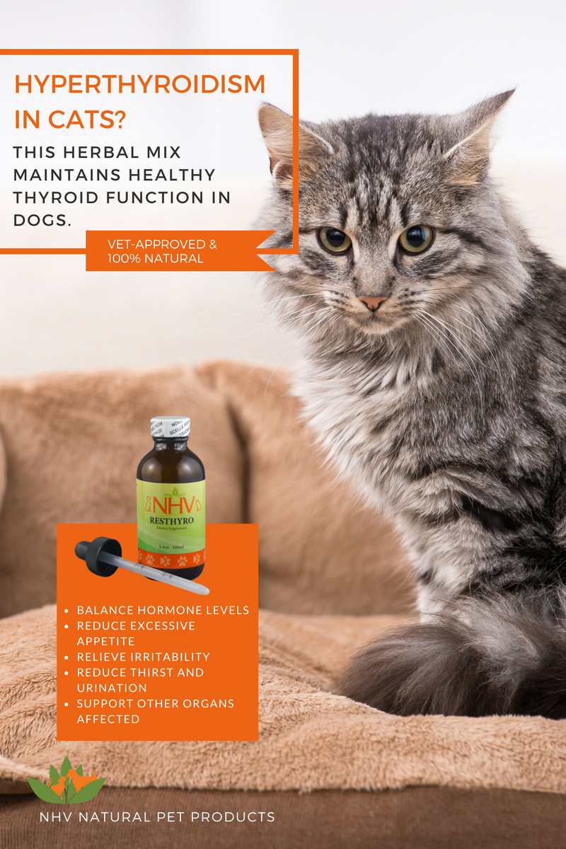 Resthyro™ for Cats Natural asthma remedies, Essential