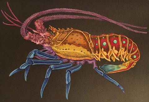 Spiny Lobster by Holly McIntosh | Intricate Ink: Animals In Detail Coloring Book | Lobster art ...