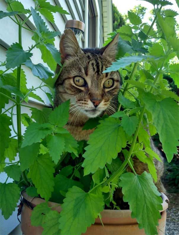 15 Times Cats Found Catnip and Stopped Functioning Cats