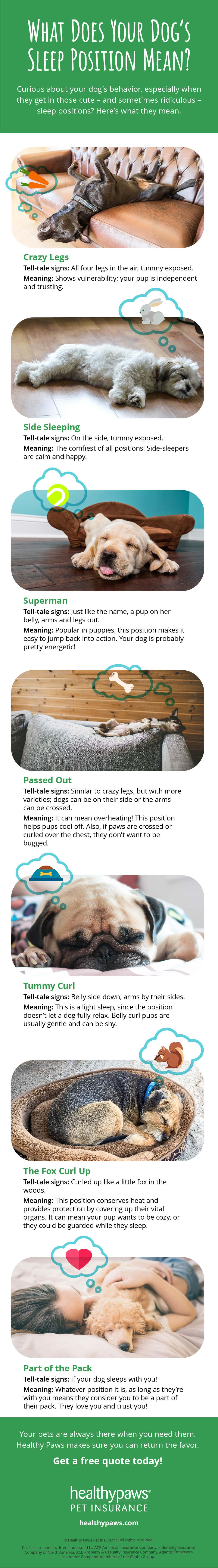 What Does Your Dog S Sleep Position Mean Healthy Paws Pet Insurance Ever Wondered Why Your Pup Sleeps The Way Sleeping Dogs Dog Sleeping Positions Your Dog