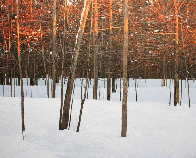 The Art Room: Bare Trees: Peter Rotter 48x60 oil on canvas 2011