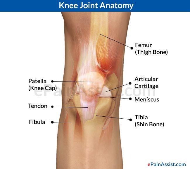Knee Joint Anatomy | Joint Pain | Pinterest | Knee pain and Chronic pain