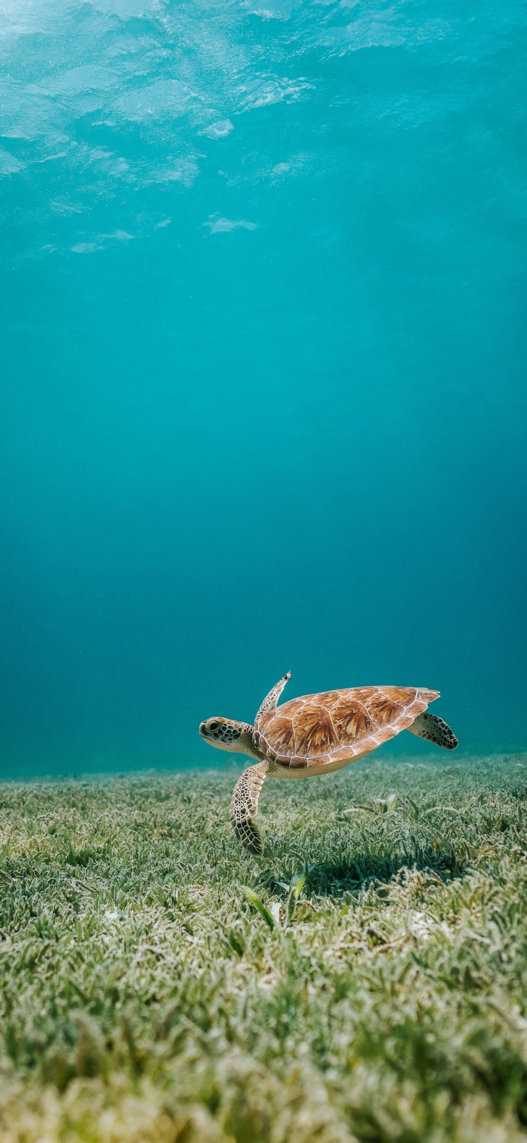 Pin by Anakonda on Turtles in 2020 Sea turtle wallpaper