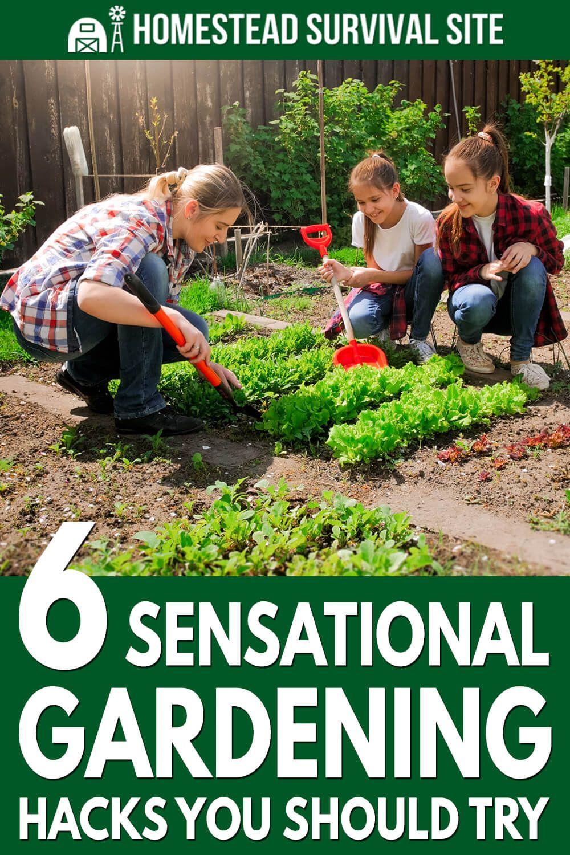 6 Sensational Gardening Hacks You Should Try In 2020 Gardening