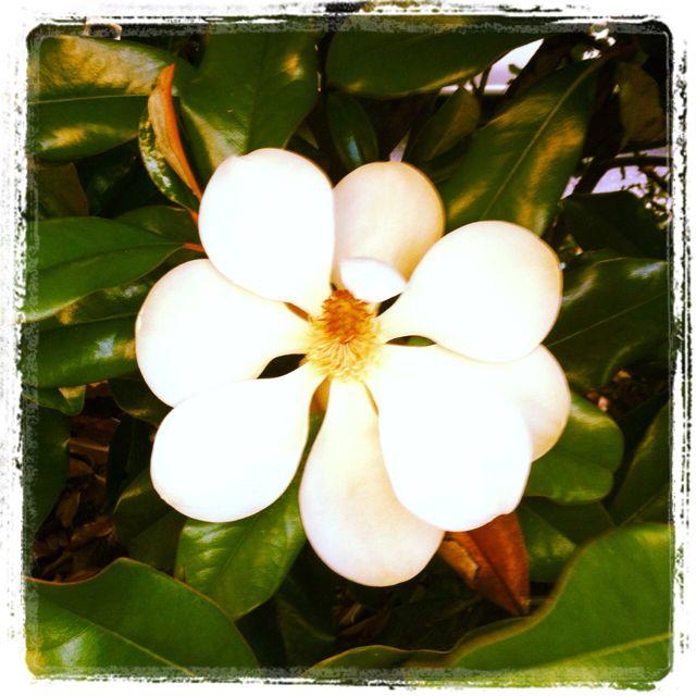 Orange Blossom Flower Florida S State Flower Blossom Flower Dream Garden Flowers