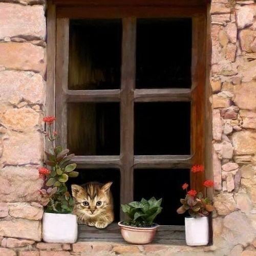 Cottage & Shabby