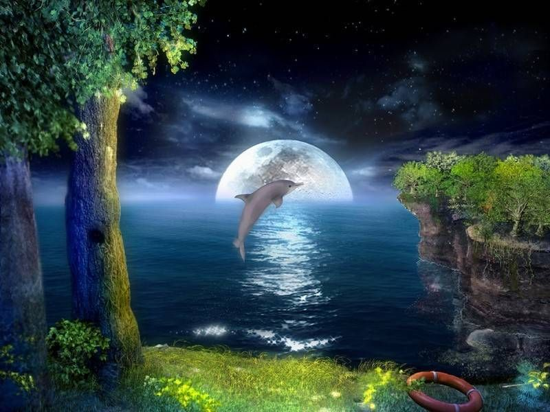 Most Beautiful Wallpapers In The World Free Download 3d Animation Wallpaper Beautiful Wallpapers Ocean Animals