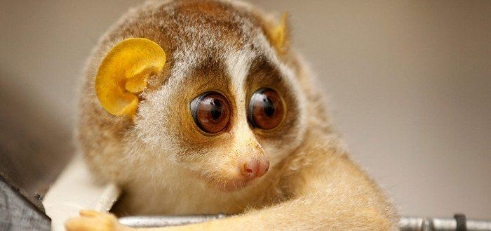 Cute Squishies Wallpaper 20 Funny Animal With Big Eyes Looking So Cute Animals