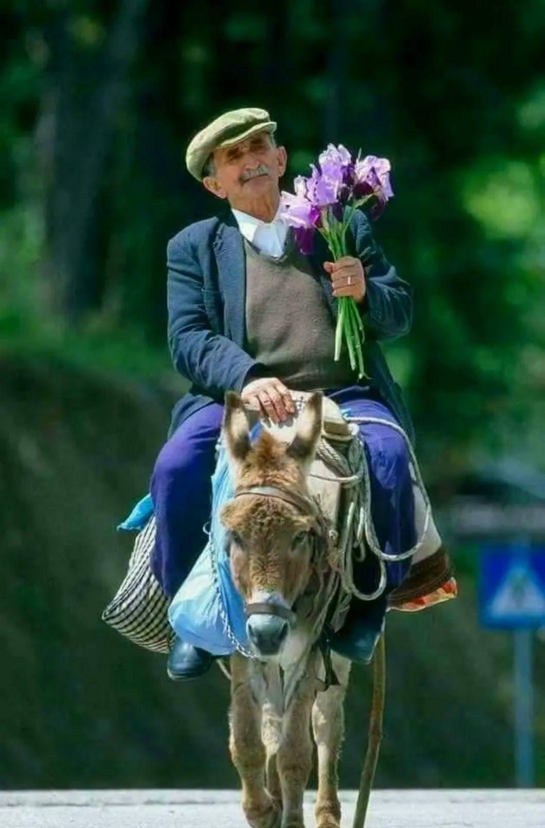 Смешные картинки принца на коне, рождением дочки лет