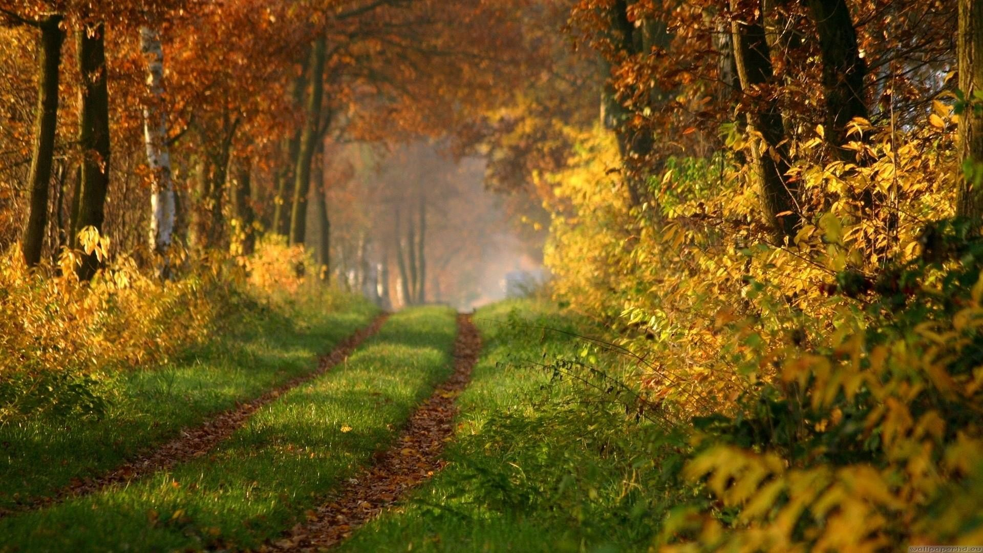 Epingle Par Sylvie Boulet Sur Deep In The Forest Feuilles Mortes Feuille