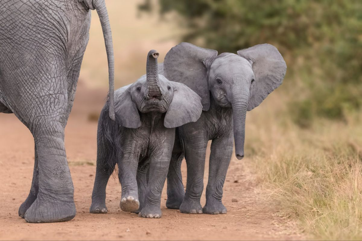 Volunteer Ethically with Elephants | Volunteer Vacations for Families