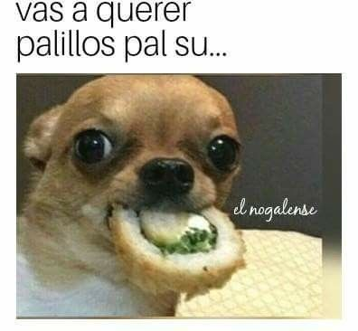 Pin By Dany La De Gaby Rodriguez On Para Reirme Animal Memes Dog Memes Animals