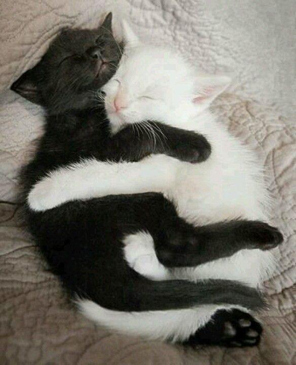 Kittens, leuk