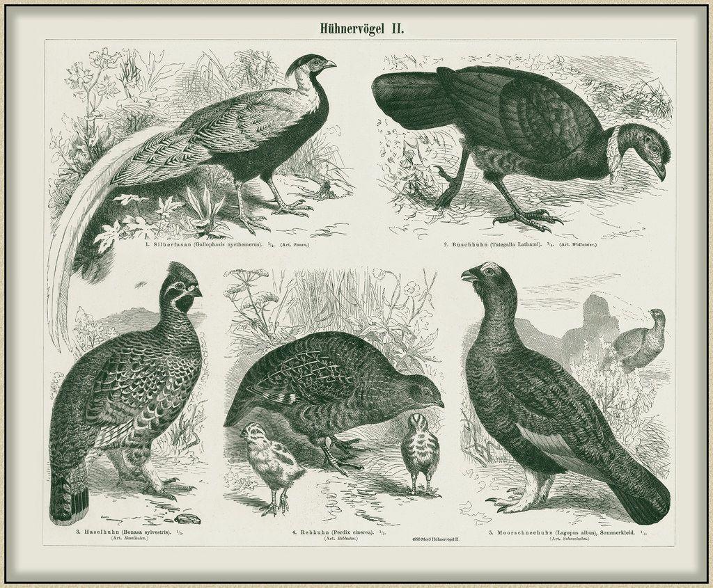 Пин на доске Engraving III ( & drawing animals)