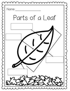 Parts of a Leaf | Kindergarten Lesson Plans | Kindergarten ...