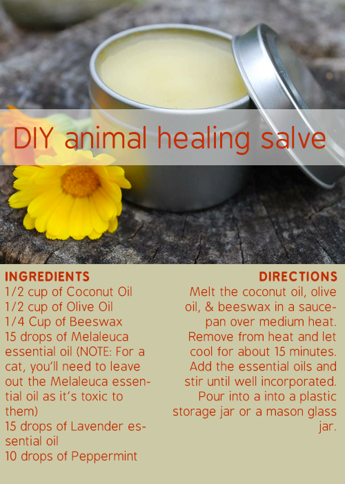 DIY animal salve. Healthy dog treats homemade, Essential