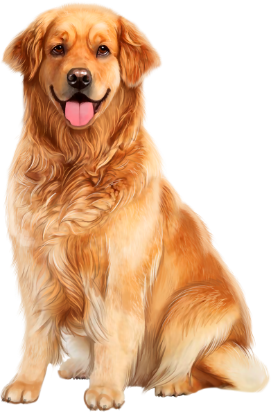 139660836 5 Png 391 595 Cute Dogs Cute Animals Dog Art