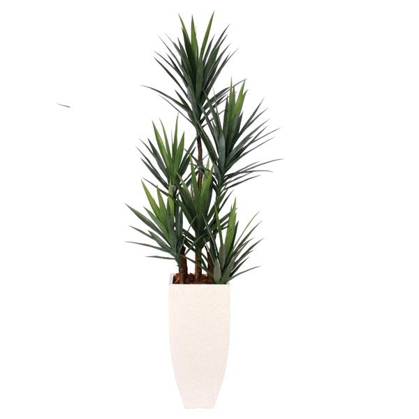 Yucca in a Tall White Terrazo Square Pot Yucca, Faux