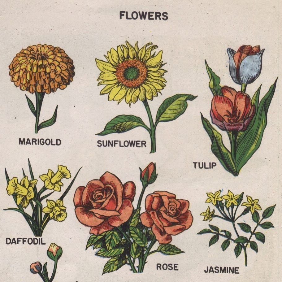 Flowers Pretty Beauty Draw Journal Sunflower Rose Tulip Jasmine Daffodils Marigold Vintage Aesthetic Http Art Hoe Aesthetic Aesthetic Art Drawings