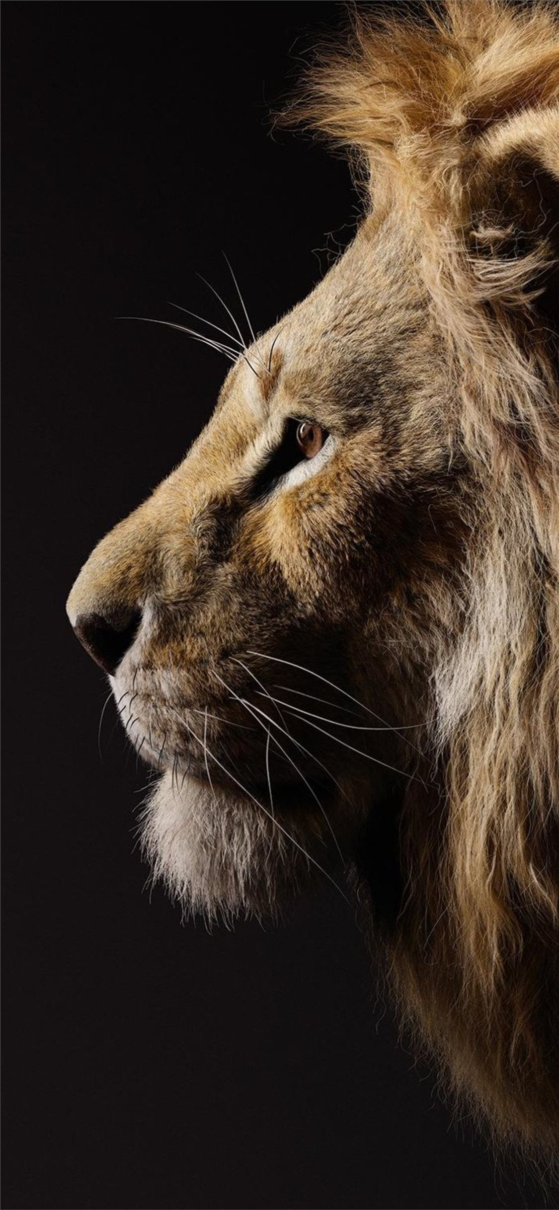 Beaty Donald Download Free Glover Iphone King Lion Movies Phonebackgroundsdisneythelionking Si Lion Photography Lion Wallpaper Iphone Lion Wallpaper Lock screen lion king wallpaper hd 2019