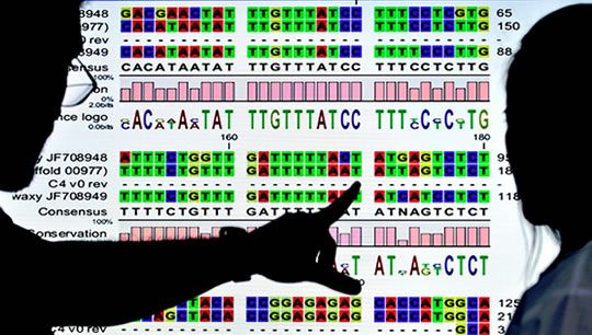 Post image for Genetic Trigger Discoverd For Most Common Form of