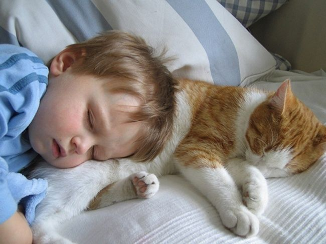 20 evidence that children need cats - @chasdaja