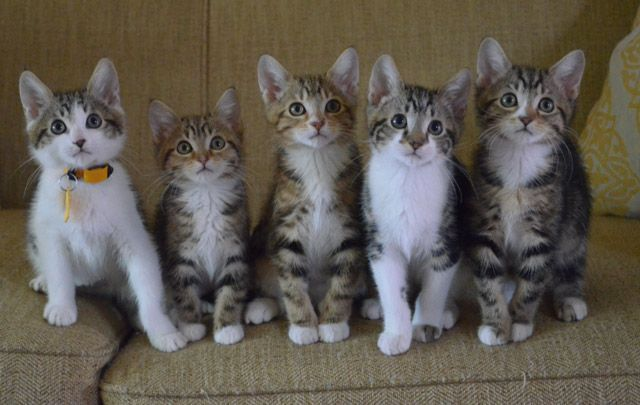 Kitten row.
