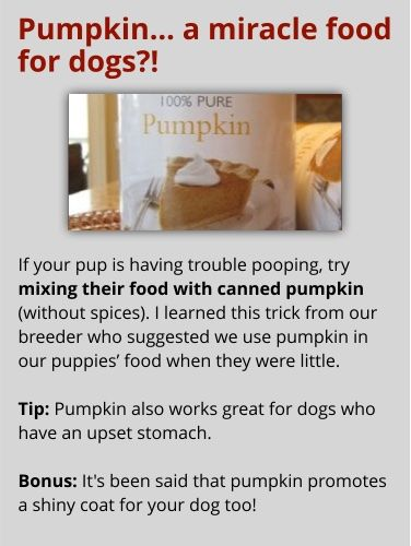 Pumpkin a miracle food for dogs?! DOG solution soecial the - training report