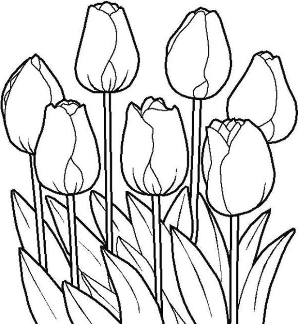Tulip Coloring Pages Printable Flower Page