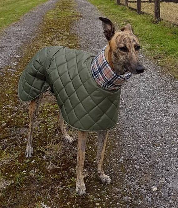 Greyhound waterproof winter coats with a long fleece neck ...