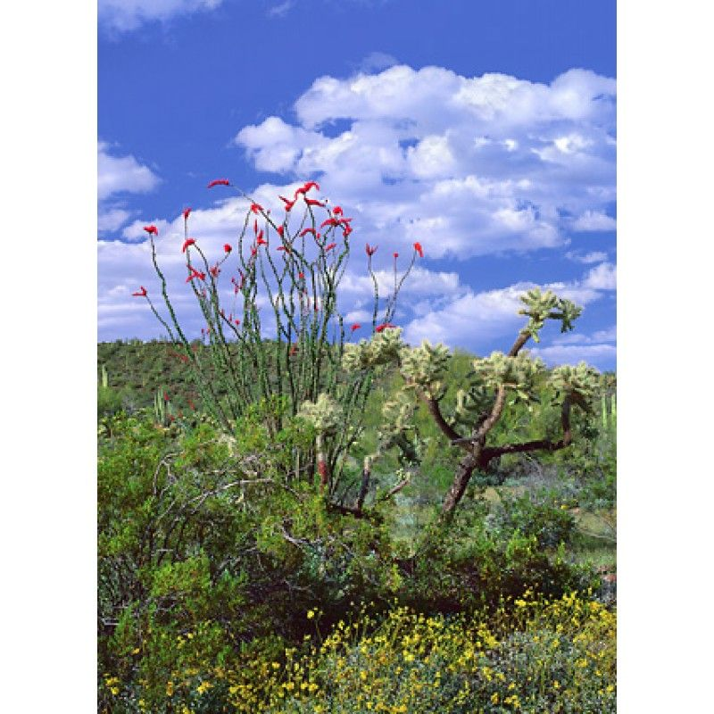 Breath of the Sonoran