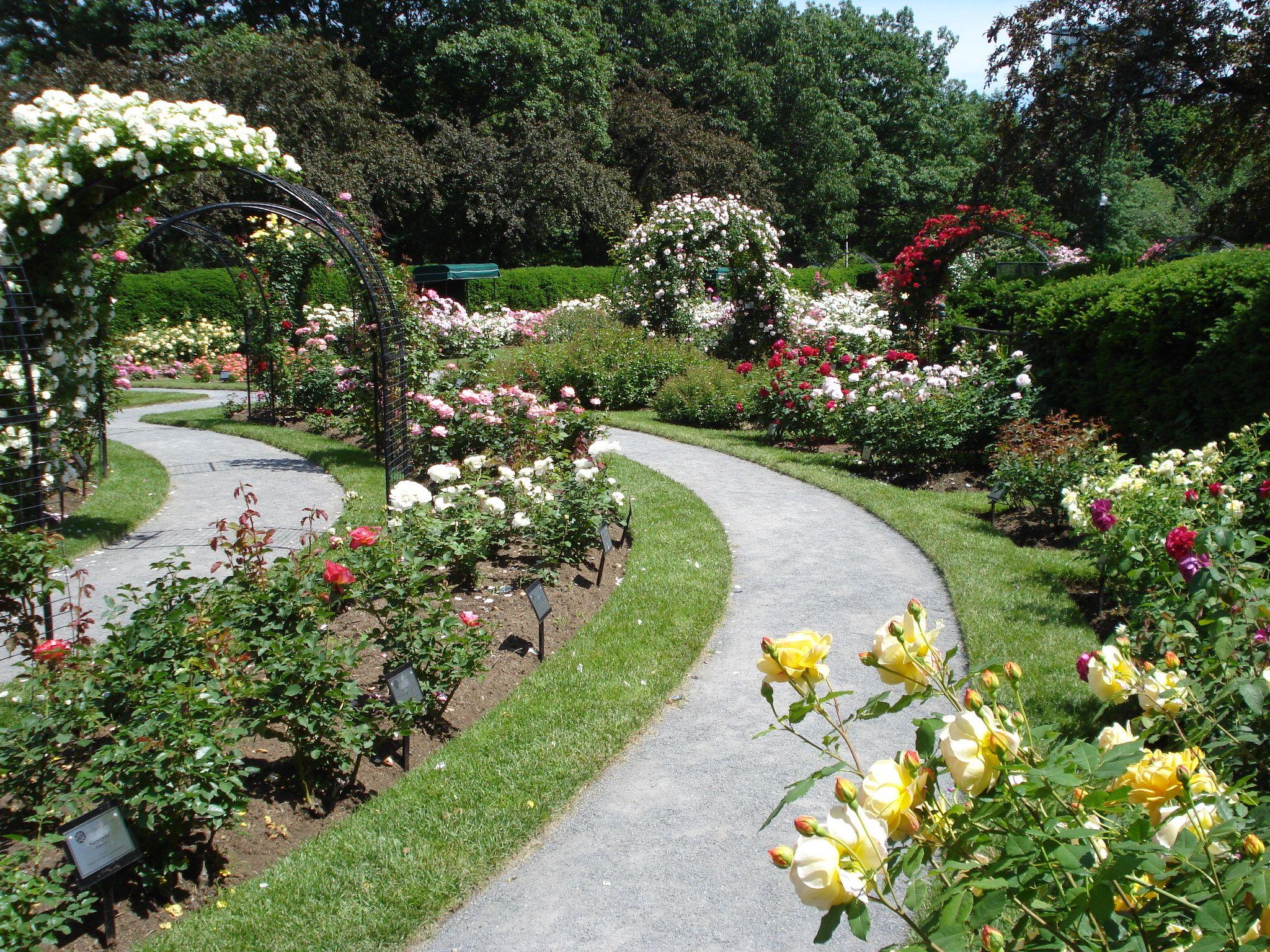 kelleher rose garden back bay fens photo by don eunson play in