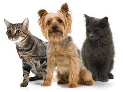 df8b38550e49 Fórmula Pet Shop (forpetshop) on Pinterest