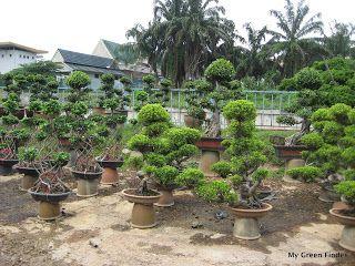 Ladang Orkid Ulu Yam