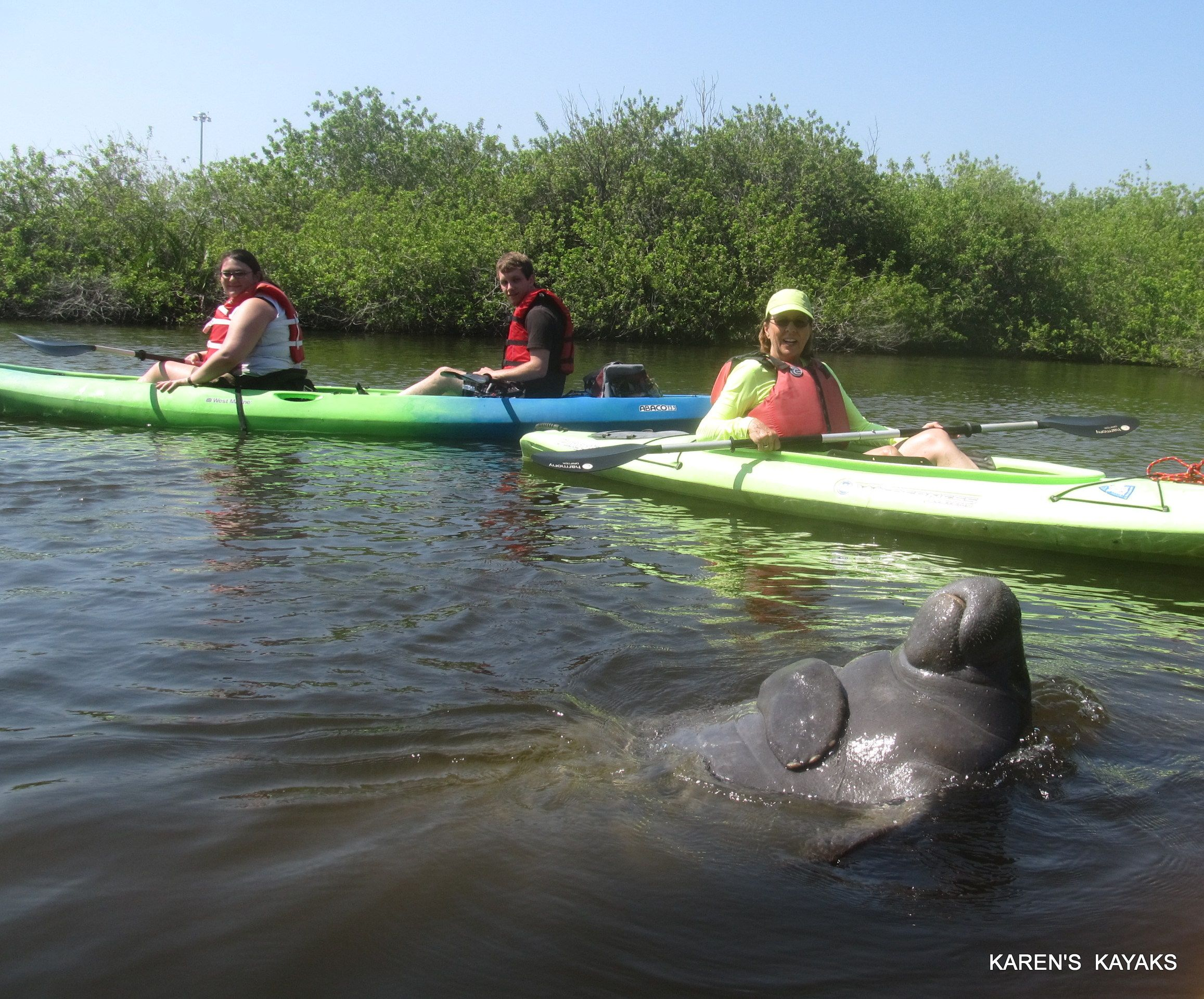 Happy Playful Young Male Manatee Melbourne Fl Sup Paddle Kayaking Paddle Boarding