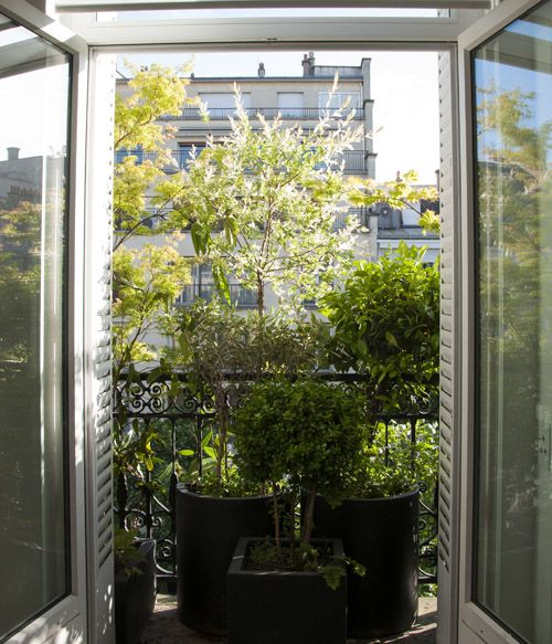 img 4954 balcony en 2019 rebord de fen tre plante. Black Bedroom Furniture Sets. Home Design Ideas