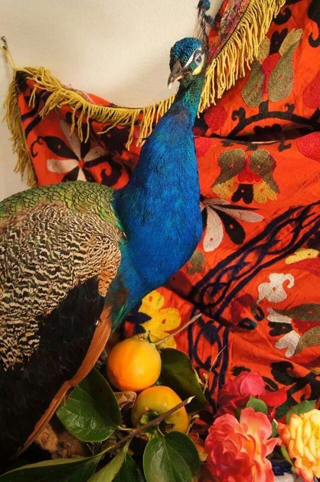 #PavoReal   Pavo real, Pavo, Uñas azules