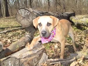 Adopt Adele On German Shepherd Dogs Dogs Dog Owners